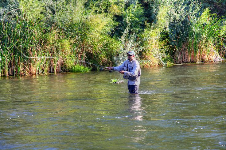 77 best living in reno images on pinterest reno nevada for Fly fishing nevada