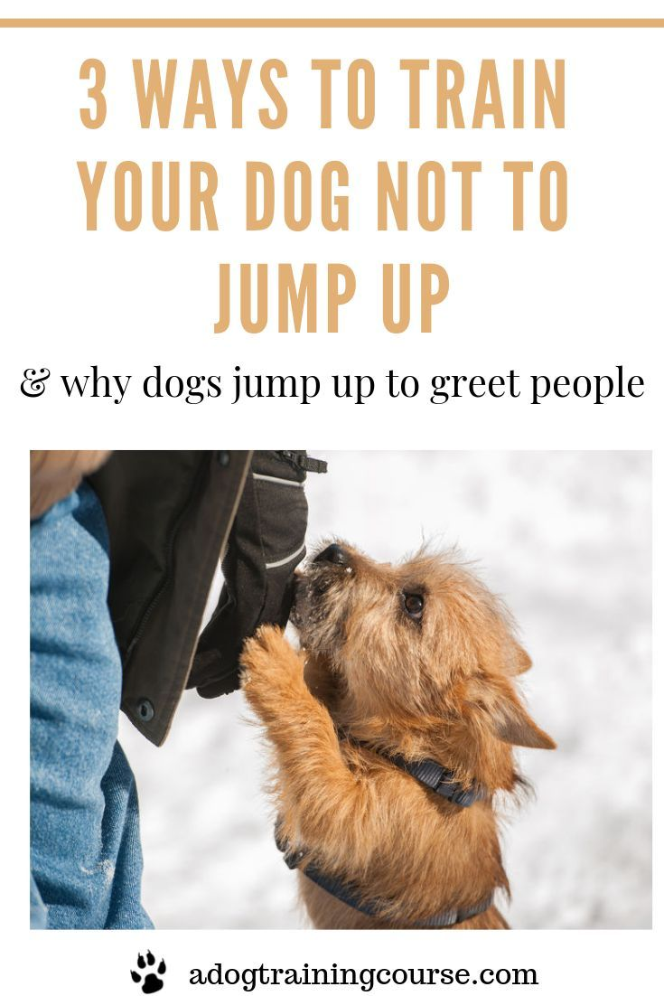 How To Get A Puppy To Not Jump On You