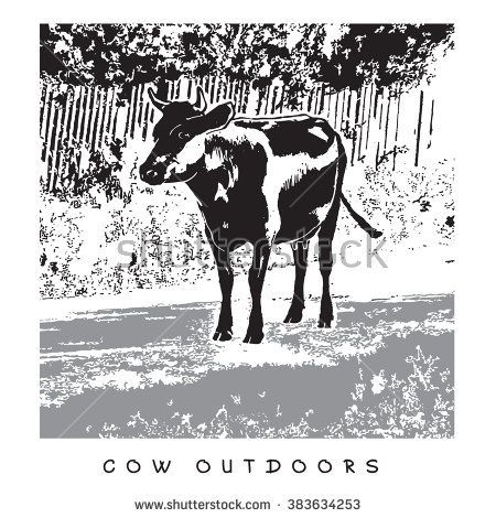 Cow Outdoors. Vector Image. Illustration in gray, black and white colors.