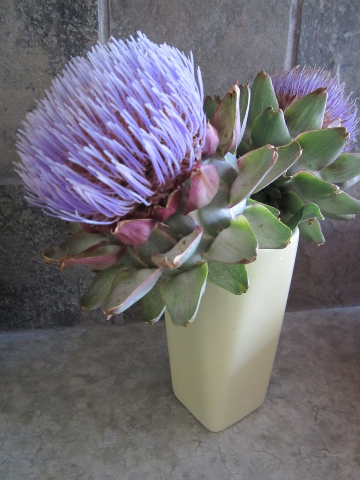 My gorgeous artichoke plant.  Who wants to eat them when you can let them flower like this?