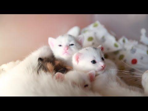 터키쉬앙고라 새끼 고양이 My little kittens - YouTube