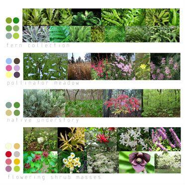 Woodland Garden Plant Palette Florida Falon Land Studio