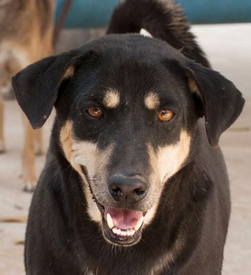 #adoptdontshop #enddogmeattrade #crueltyfree  #Animallovers #vegan #animalrights