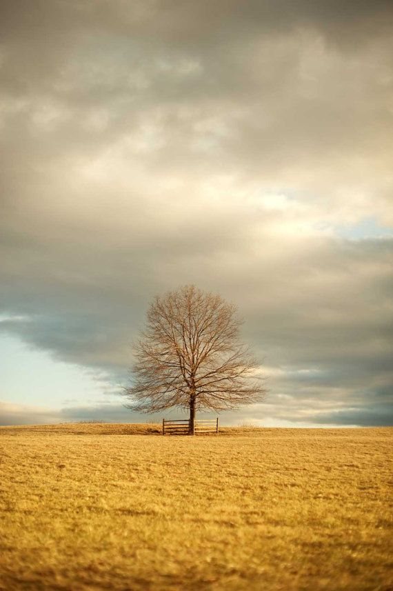 Landscape Photography, Lone Tree In Field, Sky Photograph, Pastel, Golden Sunlight, Rustic Wall Art - 8x12 Photo on Etsy, $30.00