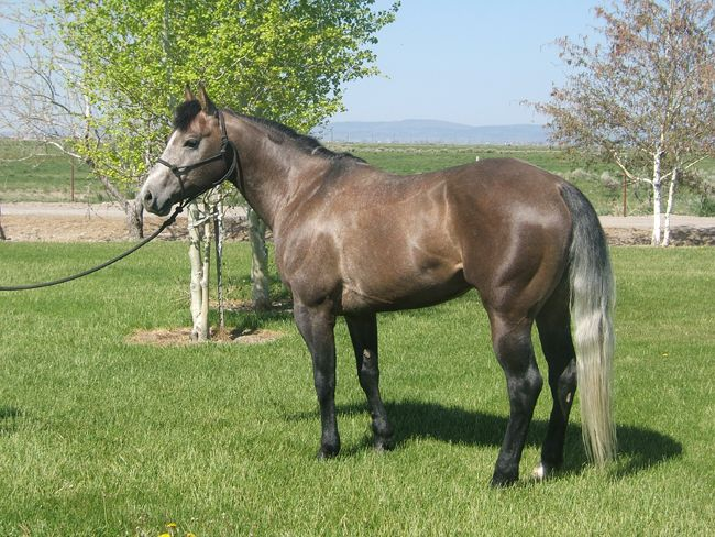 Best 25+ Horse sales ideas on Pinterest Pretty horses, Blue roan - Horse Sales Contracts