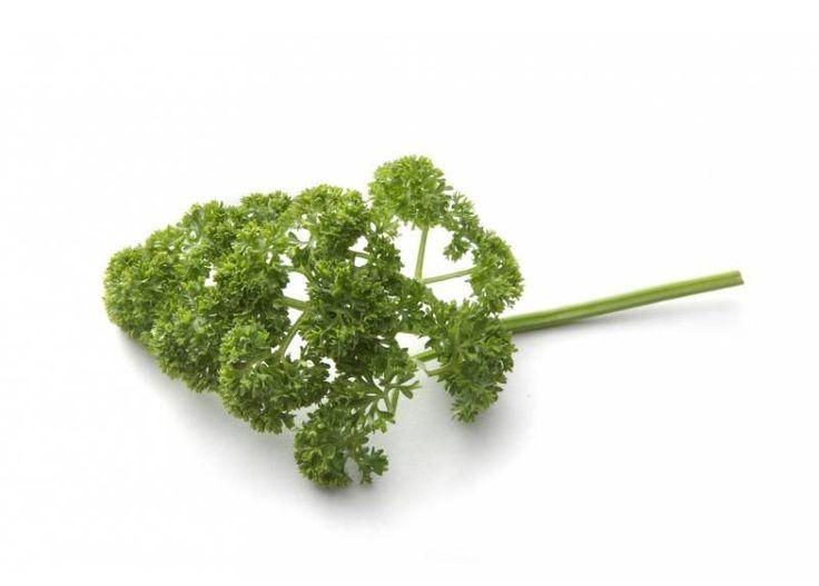 Is peterselie gezond?Peterselie komt uit de Umbelliferae familie die wortelen, selderij, dille, venkel, komijn, koriander, pastinaak, enz.