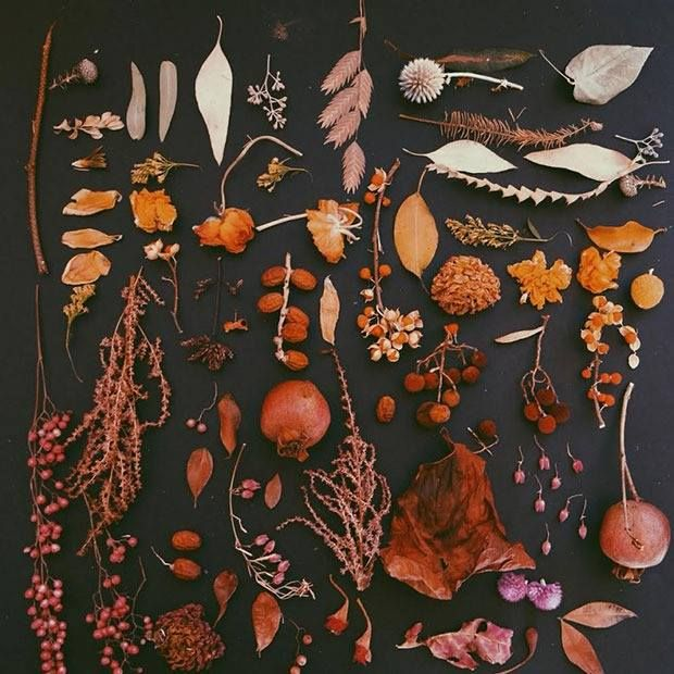 This is a really cool visual. All these natural Fall colors!