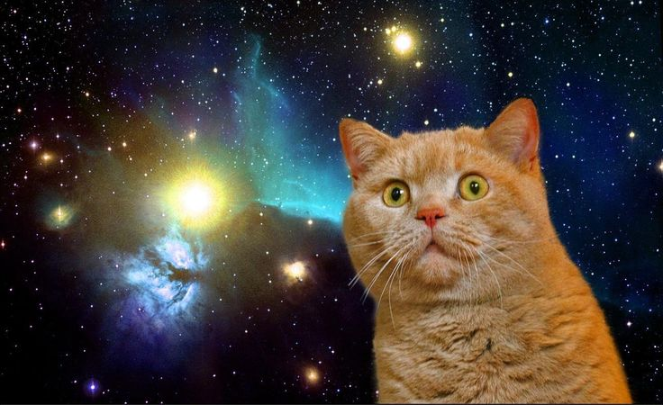 to infinity and MEOW!!!