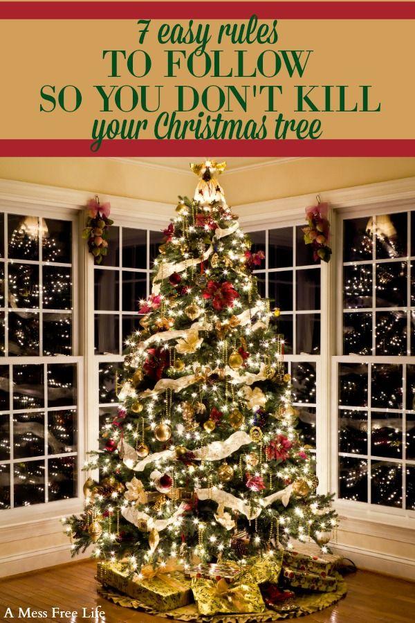 7 Rules To Keep A Christmas Tree Fresh All Season Long Christmas Lights Christmas Tree With Presents Cool Christmas Trees