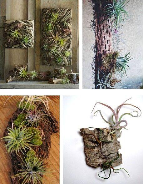「エアプランツ」は土がいらない植物として有名で、最近ではインテリア雑誌などで紹介されることが多くなりました。「エアプランツ」を初めて見た方は、あまり見慣れない姿に「何これ、生きてるの?」「名前は聞いたことあるけど、どんな植物?」など疑問に思われることもあるのではないでしょうか?ここではそんな謎の多い植物、「エアプランツ」の生態、楽しみ方、育て方を紹介します。
