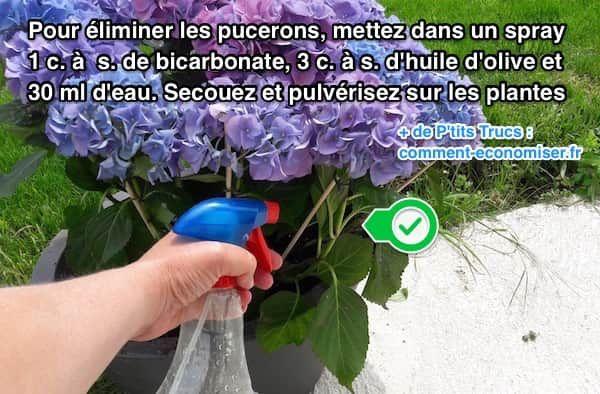 Voici un anti-pucerons naturel et super efficace révélé par un ami jardinier. La recette est toute simple, il suffit de mélanger de l'huile d'olive et du bicarbonate.  Découvrez l'astuce ici : http://www.comment-economiser.fr/truc-facile-eliminer-pucerons-naturellement.html?utm_content=buffer12ca2&utm_medium=social&utm_source=pinterest.com&utm_campaign=buffer