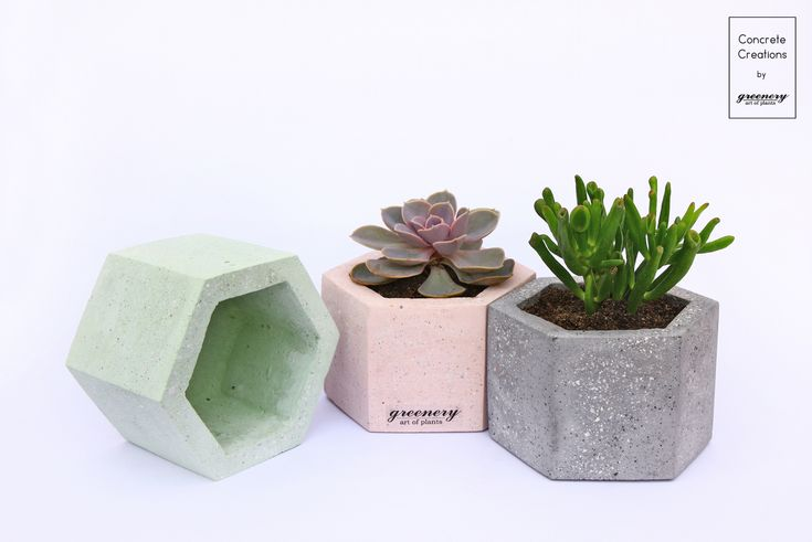 Have you checked out our bigger concrete pots? Available on www.greenery.gr #greenery #greeneryoriginals #concrete #succulents #greece
