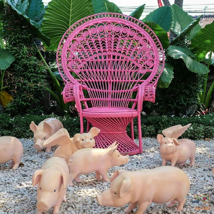Taken by @balidaily #piggies #pink #garden