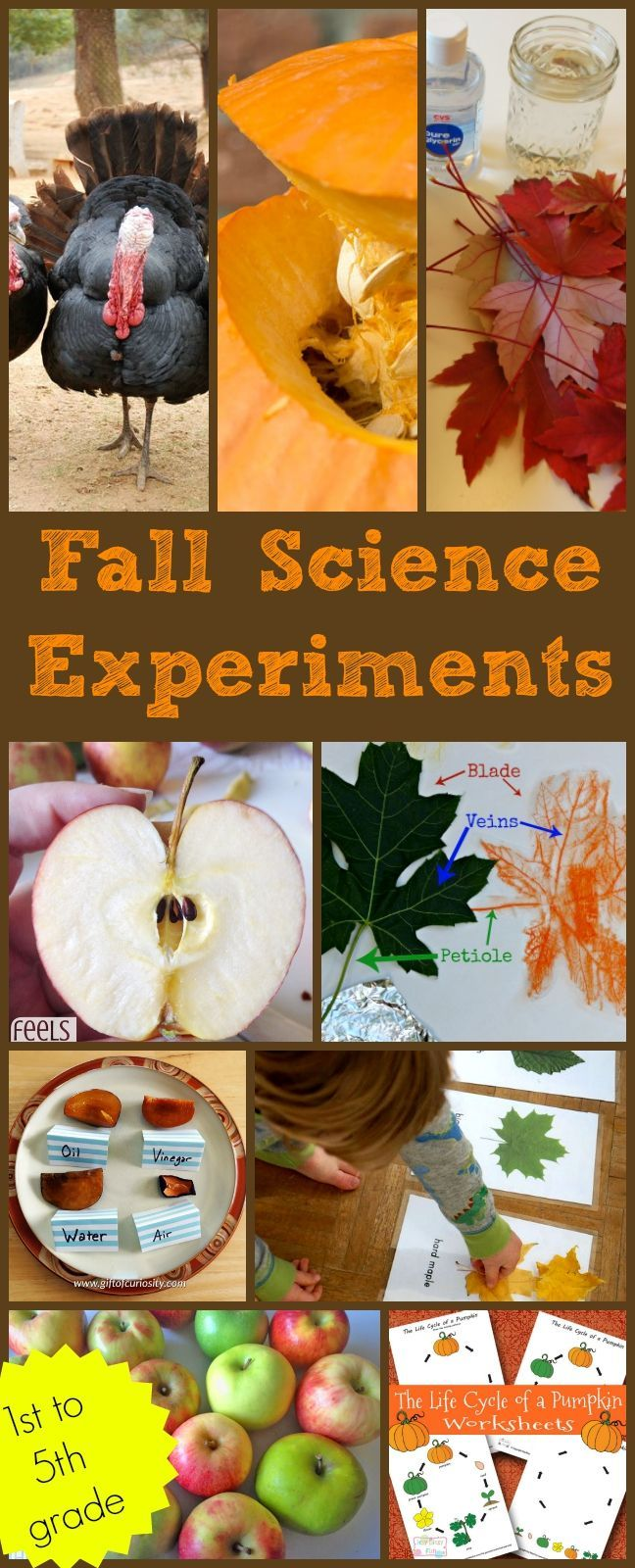 Fall science experiments for 1st grade, 2nd grade, 3rd grade, 4th grade, 5th grade. Apples, leaves, pumpkins, Halloween, Thanksgiving, animals in autumn and more.