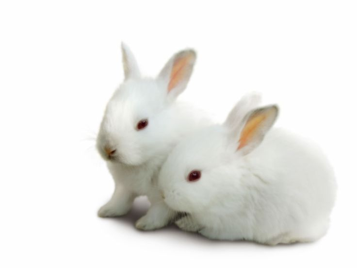 Top Beautiful And Cute Rabbit Wallpapers In HD