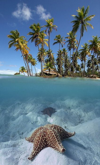 tropical paradiseReal Life, Splitview Starfish, The View, Ocean, Split View, Places, Beach, The Maldives, Life Photography