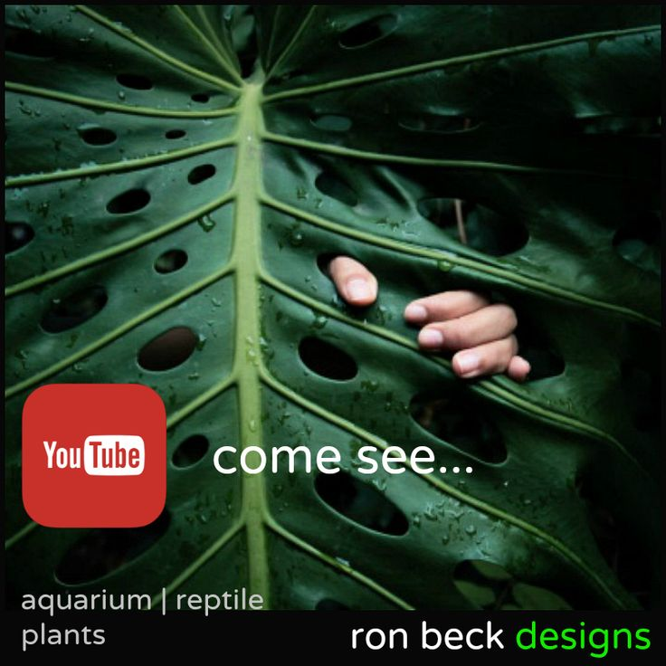 YouTube channel | ron beck designs. https://www.youtube.com/channel/UCy5vHFvrtHbQ5pmrdxpJZCQ Hand designed aquarium and reptile plants & succulents. ronbeckdesigns.com | ebay | etsy. #aquarium #reptile #decor #plants #ron_beck_designs #aquascaping #artificial #plastic