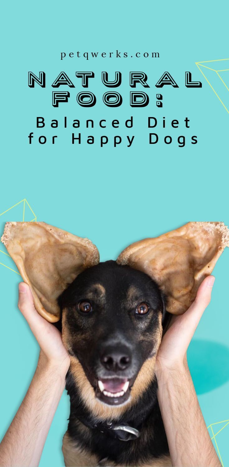 Natural Food Balanced Diet For Happy Dogs Happy Dogs Human Food Dog Food Recipes