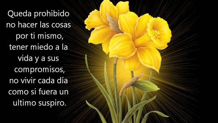 QUEDA PROHIBIDO poema de Pablo Neruda