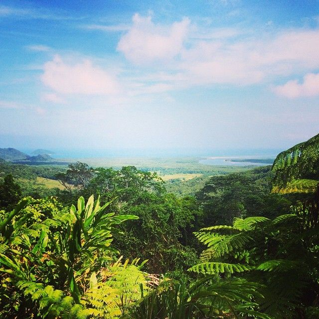 // a u s t r a l i a //  Who wants to visit the stunning Daintree Rainforest? Photo taken by ultimate.travel on Instagram #capetribulation #daintree #rainforest #cairns #queensland #australia