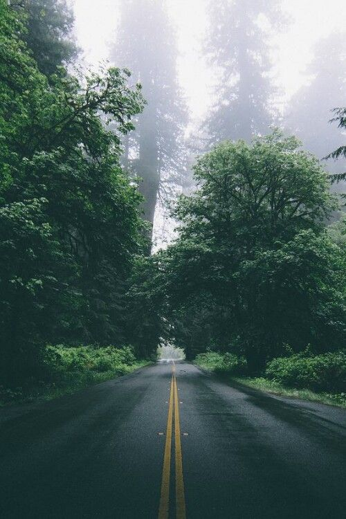 nature, road, and forest kép