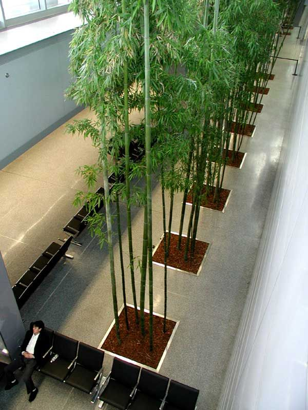 Tall Planters Indoor