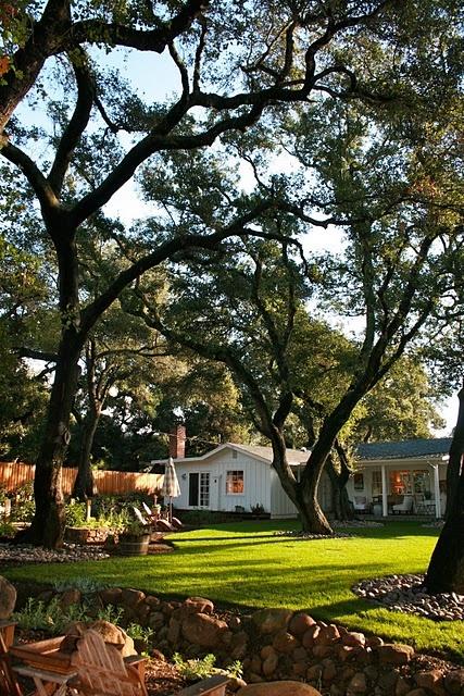 oak trees: Oak Trees Lov, Beautiful Yard, Rivers Rocks, Oak Trees On, Amazing Trees, Beautiful Backyard, Oak Trees Yard, Landscape Stones Around Trees, Back Yard
