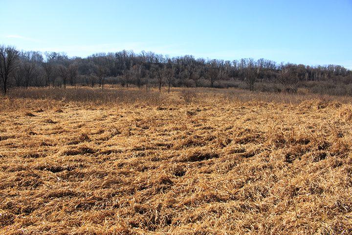 Savage Fen SNA - Seepage Meadow/Carr - http://www.minnesotaseasons.com/Destinations/Savage_Fen_SNA.html