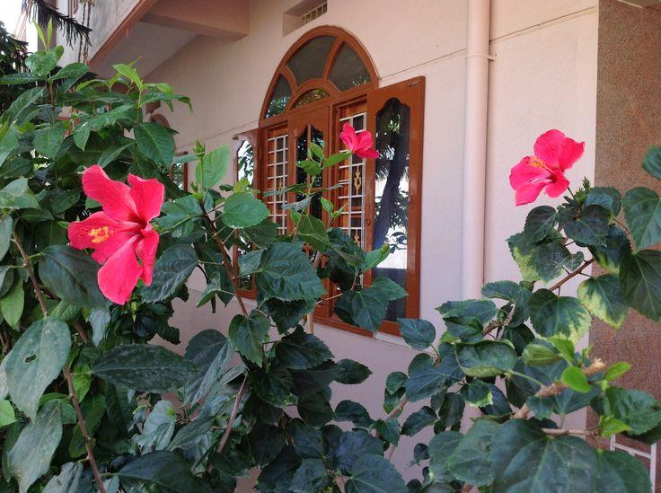 మూడు మందారాలు ... Three mandaaram flowers