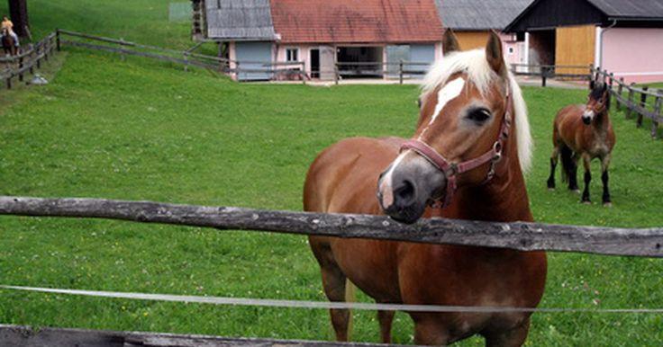 Exercícios para cavalos com lesões nas ancas e no joelho. Lesões no joelho e nas ancas são comuns em cavalos, e às vezes não são fáceis de serem notadas e avaliadas. O joelho é conectado às ancas por um longo e largo fêmur. Os cavalos de corrida são frequentemente diagnosticados com essas lesões devido às marchas aceleradas e por correr em curvas de forma muito rápida. Ter apoio para ficar em pé é ...
