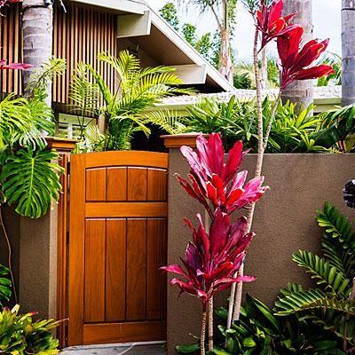 Tropical backyard entryway