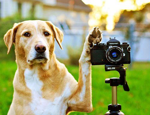 Réussir une photo de votre chien !