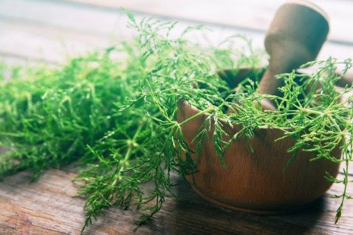4 plantes pour drainer le système digestif, alléger le foie puis reminéraliser l'organisme pour entrer dans le printemps avec vitalité.