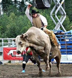 La monte du taureau sauvage demeure l'épreuve du rodéo la plus dangereuse pour les participants.