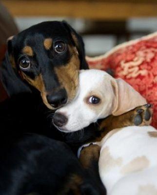 Pup Hugs