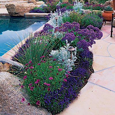 Pool garden border - Garden Border Ideas - Sunset; African daisies, lobelia, sea lavendar, silver Dusty Miller