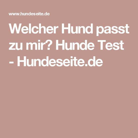 Welcher Hund passt zu mir? Hunde Test - Hundeseite.de