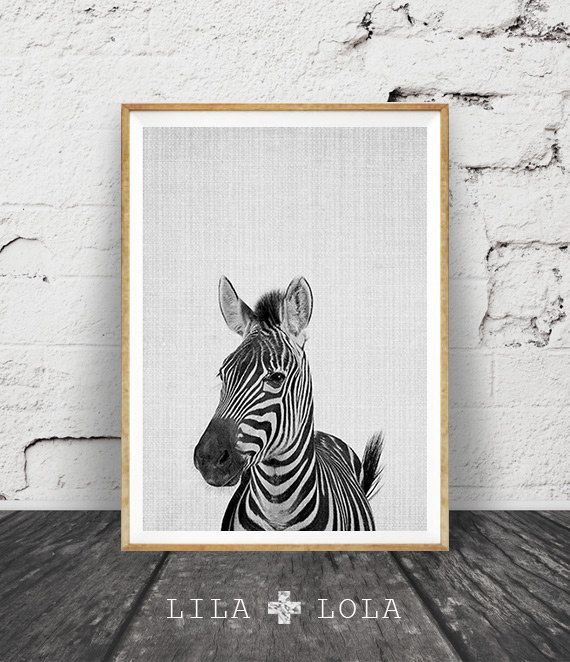 Zebra Wall Art Print, Black White and Grey Nursery Decor, Modern Minimalist Printable Instant Download, Peekaboo Animals, Safari Photography by Lila and Lola.