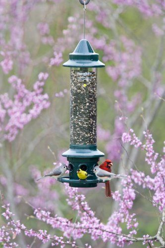 Wild bird feeder with 6 feeding stations, adjustable perches, and optional cardinal perch ring