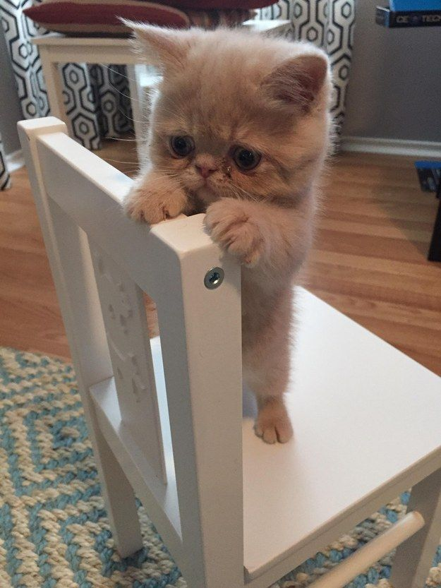 This kitten who has the cutest surprise face in the ENTIRE world.