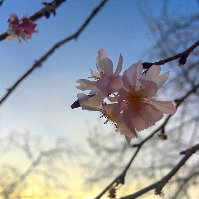 【nana_slept】さんのInstagramをピンしています。 《. . 儚く散りゆく命は . #空 #雲 #夕焼け #綺麗 #自然 #夕陽 #イマソラ #カコソラ #beautiful #nature #sky #cloud #sunset #landscape  #iphonephotography #sun #写真好きな人と繋がりたい  #写真撮ってる人と繋がりたい  #ファインダー越しの私の世界 #небо #природа #облака #закат #япония #梅 #桜 #japan #하늘 #예쁘다 #자연》