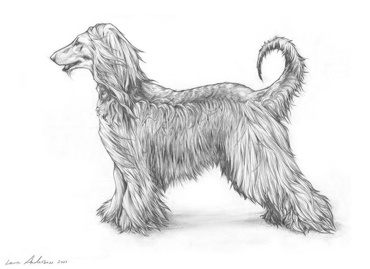 Pin by Bonnie Simmons on Afghan Hound Art (With images ...