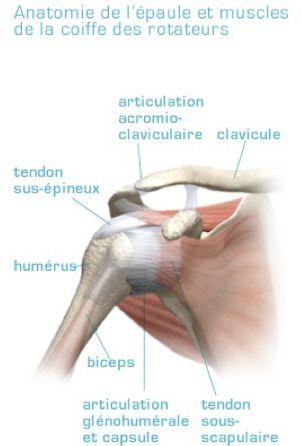 Dr. Marc Beauchamp - Bursite, Tendinite et syndrome d'accrochage de l'épaule | Dr. Marc Beauchamp, chirurgien orthopédiste