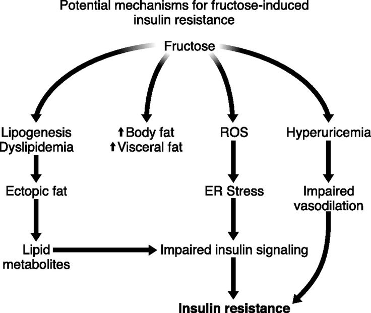 obesity diabetes and high fructose corn F ructose consumption (as both high fructose corn syr-up and sucrose) has increased coincidentally with the worldwide epidemics of obesity and metabolic syndrome.