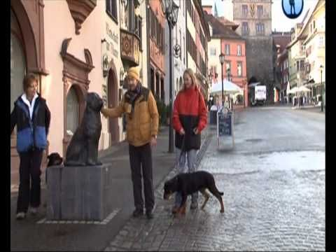[Планета собак] Ротвейлер. Германия.