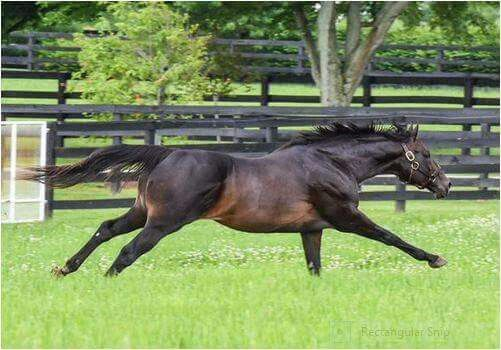 Wow! Look at that stride! Pioneer of the Nile, sire of American Pharaoh.