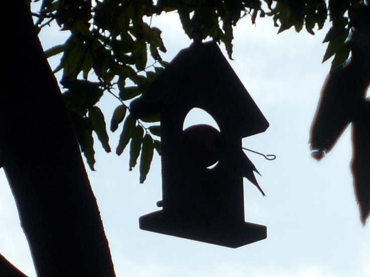 Bird feeder. Caught the tail end ... taken at twilight.