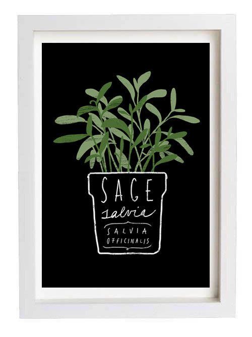 "Sage Salvia Herb Mediterranean Green Kitchen Art Print  11""x15"" - archival fine art giclée print from anek on Etsy."