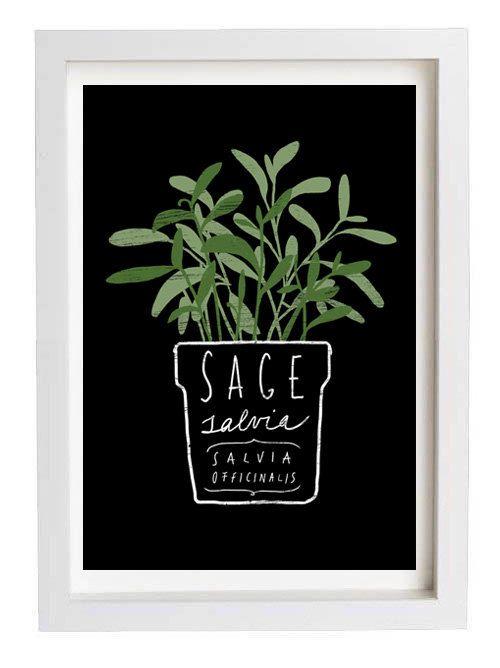 """Sage Salvia Herb Mediterranean Green Kitchen Art Print  11""""x15"""" - archival fine art giclée print"""