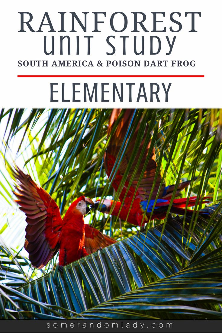 Rain forest unit study appropriate for kindergarten and elementary aged children. Click through for South American book list, movie recommendations, lapbook, projects, and activities.